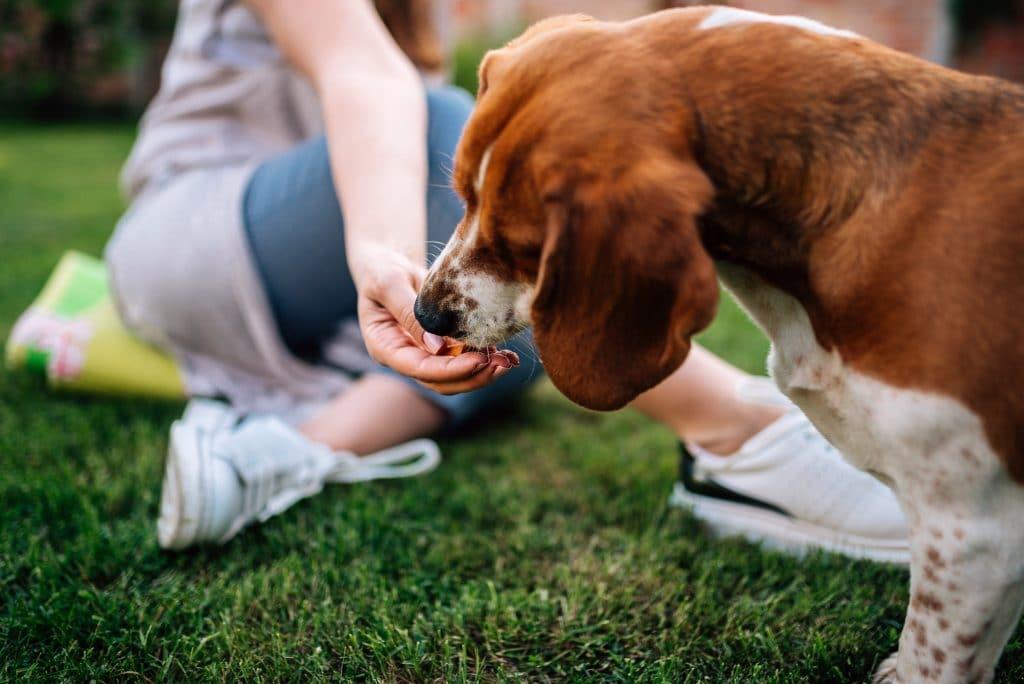 10 Things To Do In Your Garden During Coronavirus Crisis Silverbirch Gardens