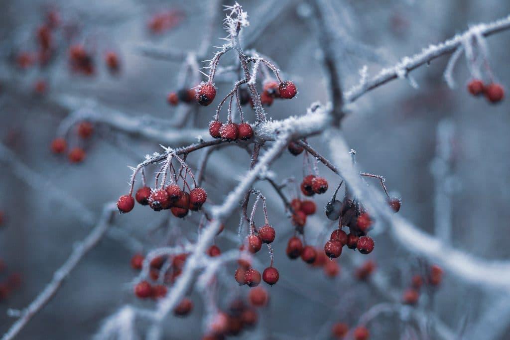 garden design to attract birds should include winter berries