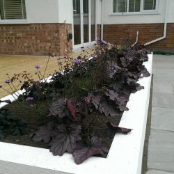white rectangular planter with purple themed planting