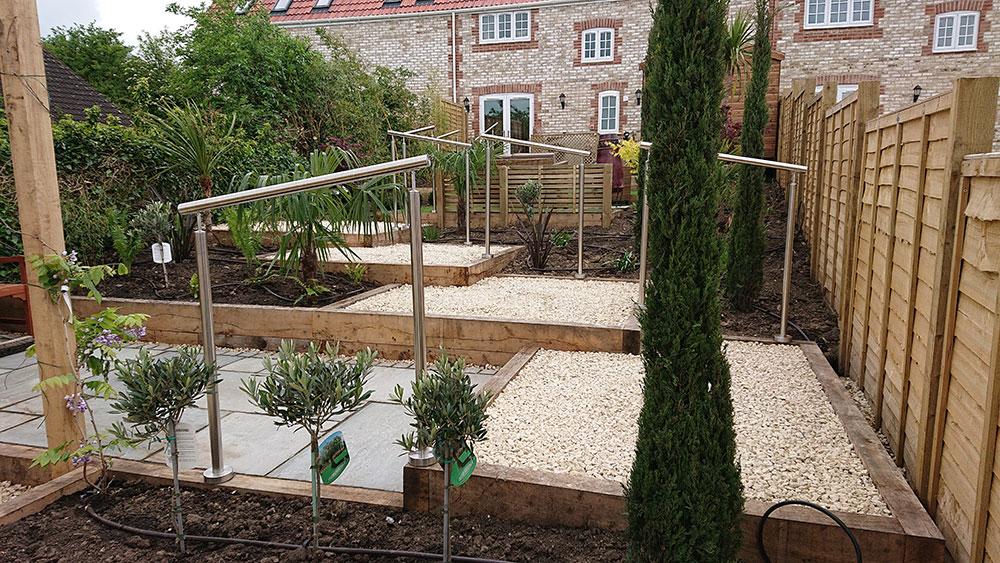 cypress fir creating shape in the garden