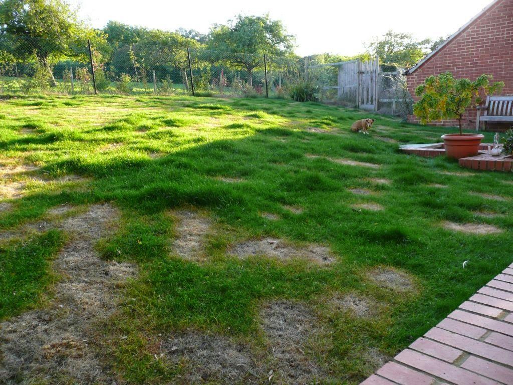 back garden in Taunton before landscaping begins