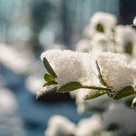 typical winter garden scene