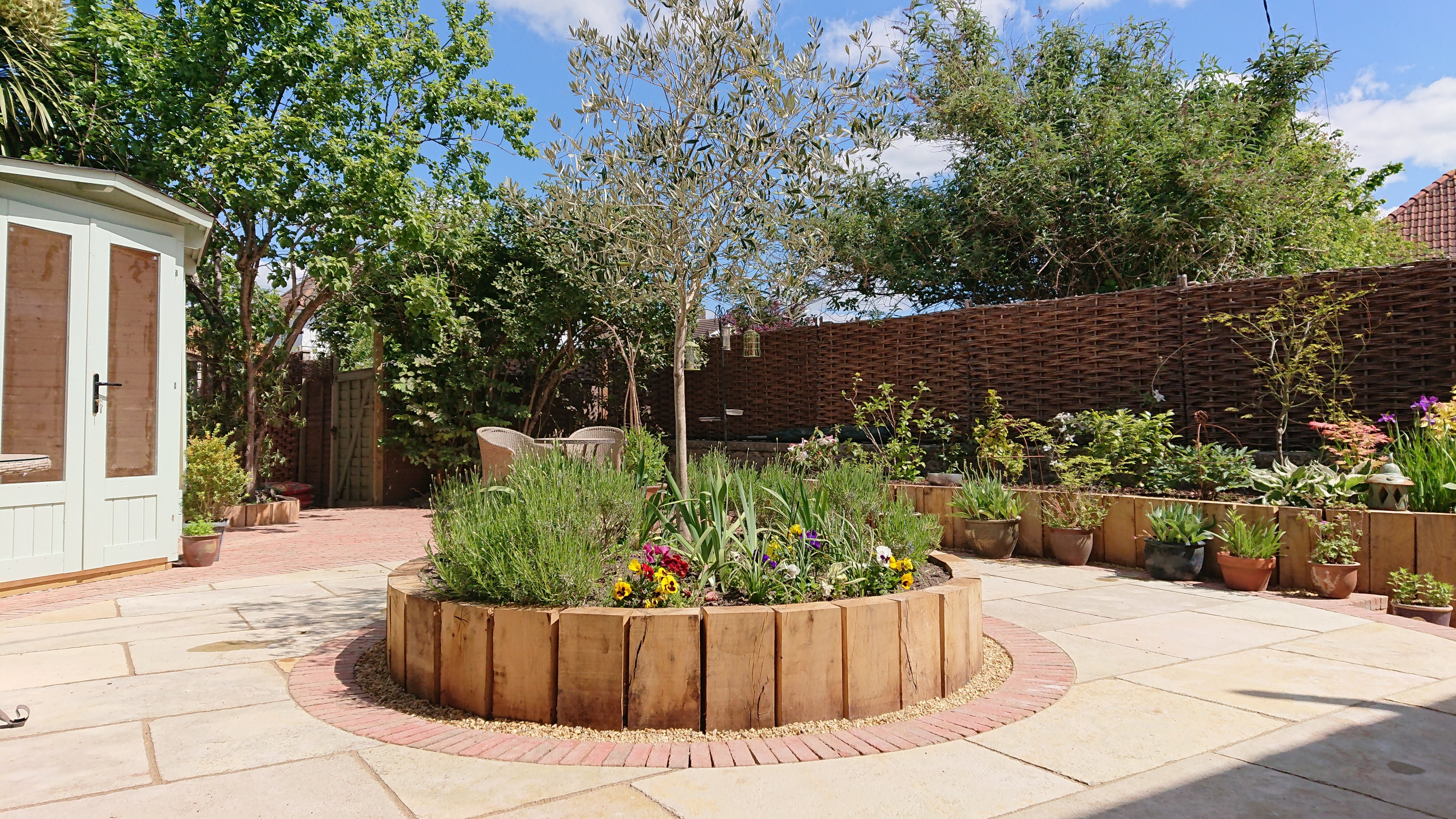 circular raised bed with olive tree
