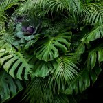 foliage plants for a tropical themed garden